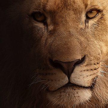 Leo y sus celos: Cosas que nadie te había contado